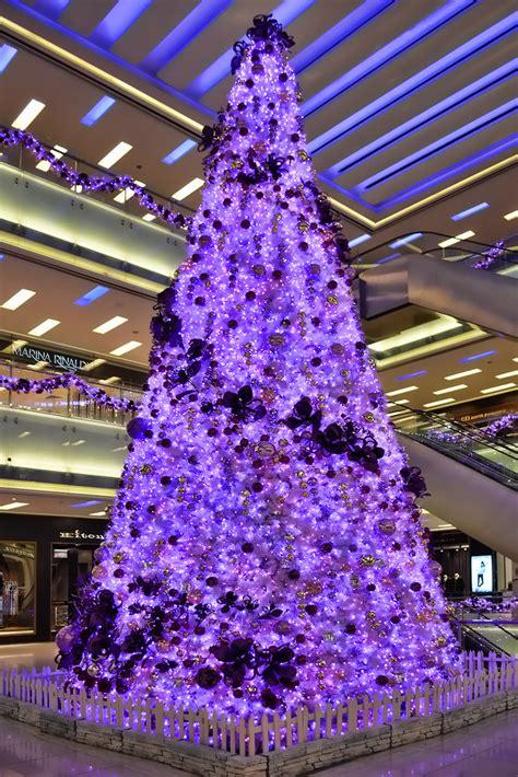 christmas tree   day   edition