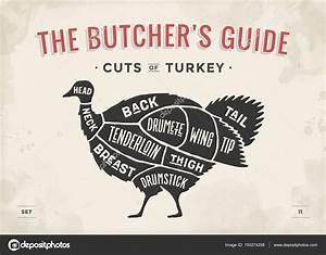Butchers Guide Cuts Of Turkey  U2014 Stock Vector