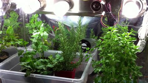 herbs growing grow indoor indoors garden containers lights tips