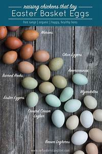 Image Result For Barred Rock Eggs Egg Laying Chickens