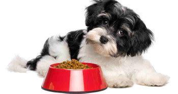 tasting dog food   picky eater