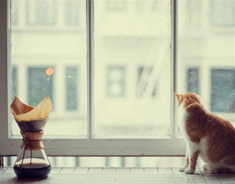 what?s on your window sill? / sfgirlbybay