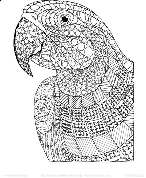 macaw exotic bird zentangle coloring page by