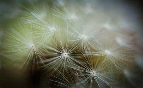 macro abstract nature photography