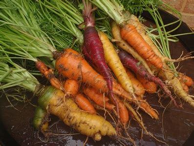 เก็บผักในบ้านมาทำอาหารทานกัน ตอน ตำแครอท กับ แกงเห็ด ...