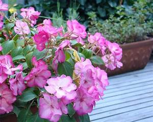 Plantes Et Fleurs Pour Balcon : quel plantes et fleurs pour le jardin sur le balcon ~ Premium-room.com Idées de Décoration