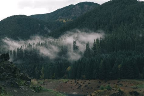 picture mountain mist mountains nature tree fog
