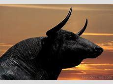 National Animal Of Spain Bull 123Countriescom