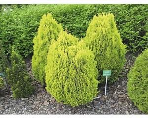 Pflanzen Im Schatten : pflanzen set vorgarten schatten 2 3 stk bei hornbach kaufen ~ Orissabook.com Haus und Dekorationen