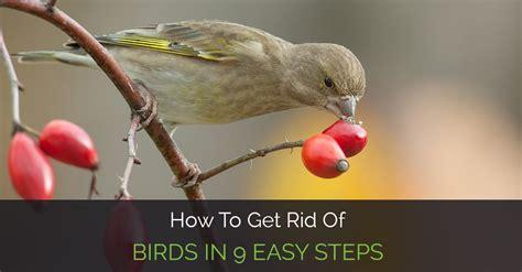 how to get rid of birds in 9 easy steps garden loka