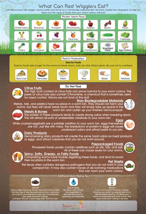 worms eat worm wiggler farm composting wigglers compost infographic bins bin food magnet refrigerator feeding vermicompost poster garden waste vermicomposting