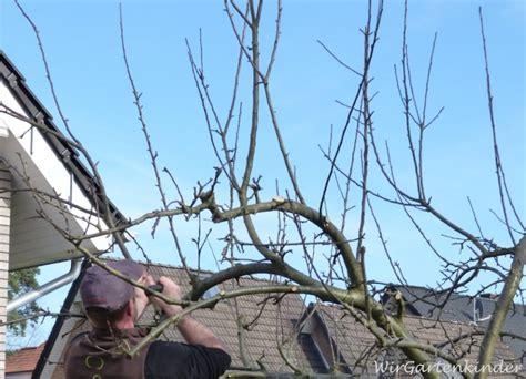 apfelbaum schneiden wassertriebe apfelbaum schneiden wassertriebe