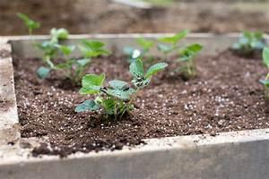Hochbeet Bepflanzen Im 1 Jahr : was im juli ins hochbeet pflanzen ostseesuche com ~ Frokenaadalensverden.com Haus und Dekorationen