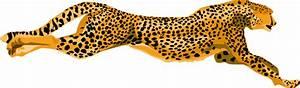 Ha Flosse Leopard Cheetah Clip Art at Clker.com - vector ...
