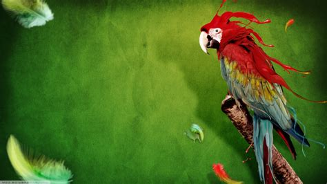 Abstract Animal Wallpaper - abstract animals birds macaws feathers green