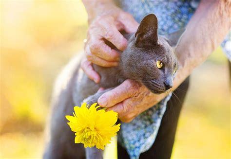 Sechs Tipps Für Den Umgang Mit Alten Katzen
