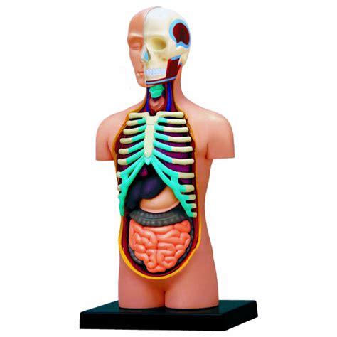 cuisine complet maquette de corps humain science nature le dindon