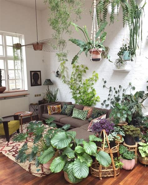 lovely plants   living room decorazioni giungla