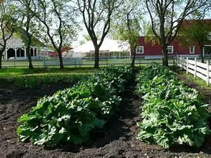 Planning Your Backyard Vegetable Garden