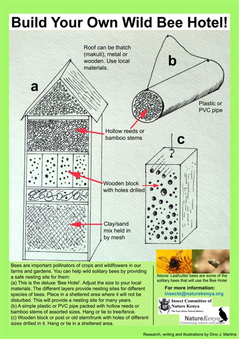 learn  build   wild bee hotel discover pollinators