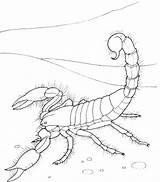 Scorpion Coloring Printable Sheet sketch template