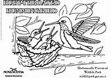 Hummingbird Coloring Ruby Throated Colibri Drawing Coloriage Oiseau Printable Getdrawings Goéland Edupics sketch template