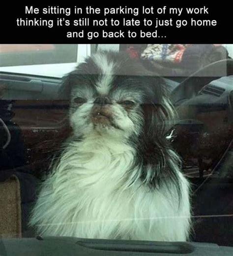 funny animal memes  animal lovers funny animals