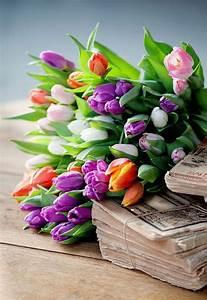 Schöne Bilder Kaufen : fr hlingsblumen 100 faszinierende bilder ~ Orissabook.com Haus und Dekorationen