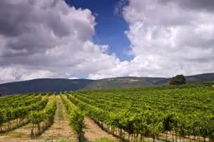 golan heights  top restaurants farms vineyards