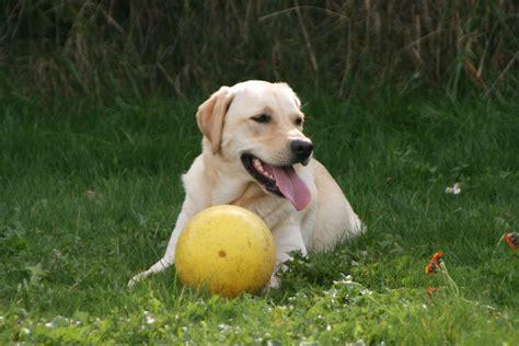 Hundegerechter Garten Dertierblog