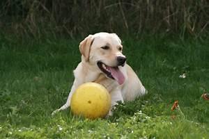 Hund Im Garten Vergraben : hundegerechter garten der tierblog ~ Lizthompson.info Haus und Dekorationen