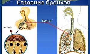 Цернилтон для лечения простатита