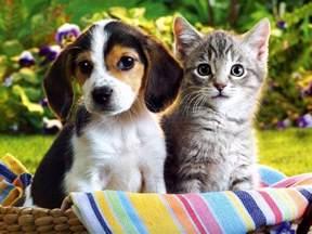 cat puppy your inner kitten puppy marko worldmarko world