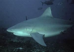 Meet 5 of The Biggest Sharks