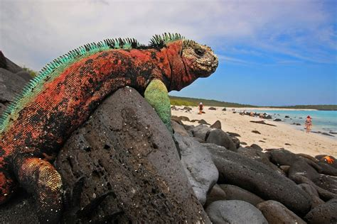 Dreaming Of A Galapagos Holiday Plan South America