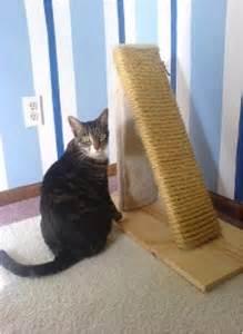 cat post top 10 diy cat scratching posts and pads cat scratching