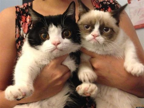 Grumpy Cat's Brother Revealed Pokey Is An Only Slightly