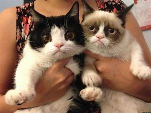 Grumpy Cat's Brother Revealed: Pokey Is An Only Slightly ...