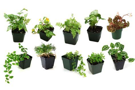 pin  terrarium plants