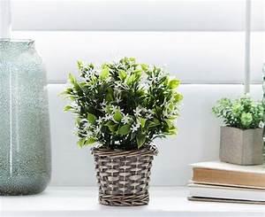 Jasmin Pflanze Pflege : jasmin zimmerpflanze ein gr ner hingucker zu hause ~ Markanthonyermac.com Haus und Dekorationen