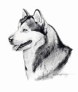 Alaskan Malamute Hund Bleistift Zeichnung Kunst Signiert Dj