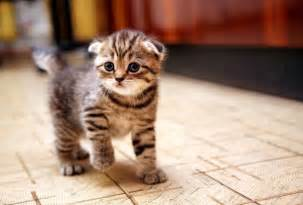 getting a cat thinking about getting a new kitten pets4homes