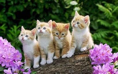 Kittens Cat Desktop Flowers Yellow Four Violet