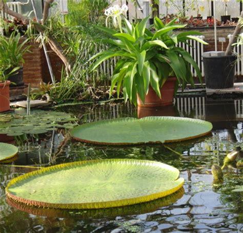 Botanischer Garten Leiden by Hortus Botanicus In Leiden
