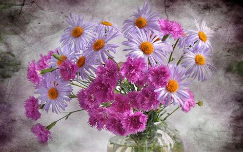 refreshing carnation vase beautiful daisies hd wallpapers