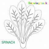 Spinach Drawing Vegetable Coloring Illustration sketch template