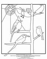 Hummingbird Coloring Drawing Sheet Library Draw Larson Got Getdrawings Resources sketch template