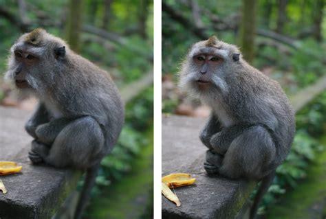 Korean Hairless Dog Monkeys