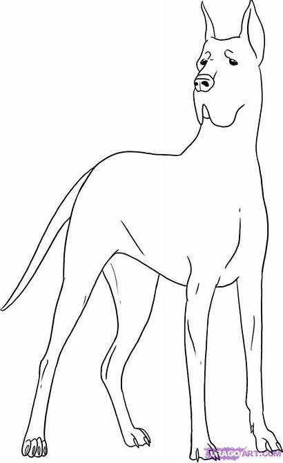 Dane Dog Draw Coloring Step Pages Drawing