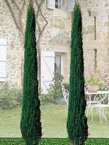 Säulen Pflanzen Winterhart : raketen wacholder blue arrow nadelgeh lze geh lze im gartenversandhaus von n l chrestensen ~ Frokenaadalensverden.com Haus und Dekorationen